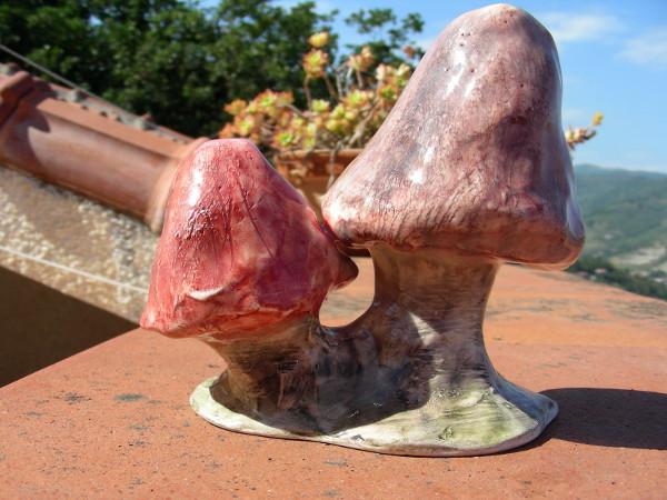 Immagine di funghi grandezza media vista laterale