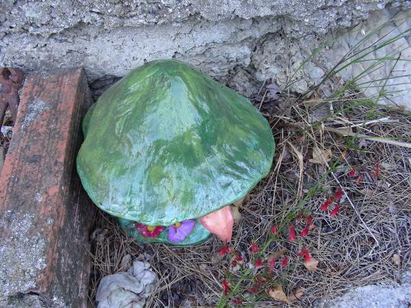 Immagine di un fungo grande con volto vista dall'alto