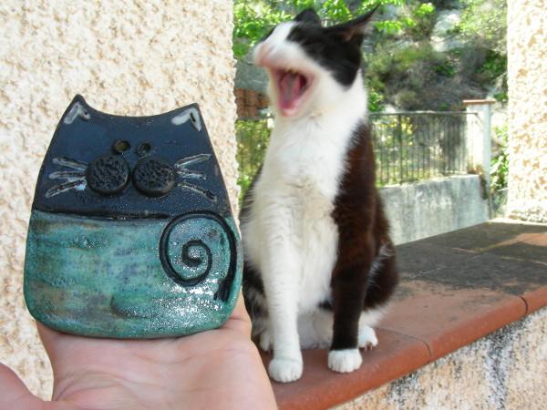 Immagine di un gatto raku bicolore piccolo proporzioni