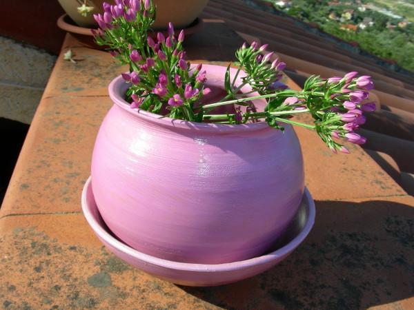 Immagine di un vaso e sottovaso color rosa